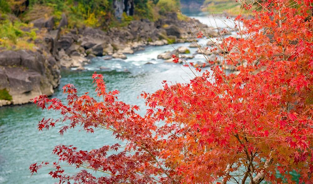 曽木の滝と紅葉2