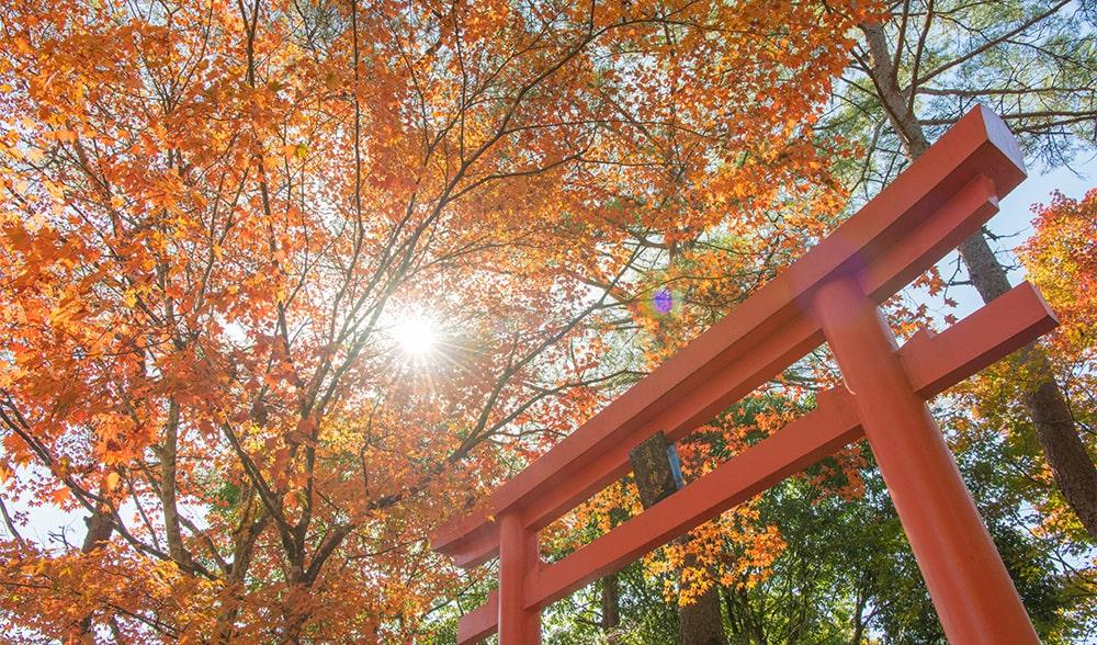 清水神社と紅葉