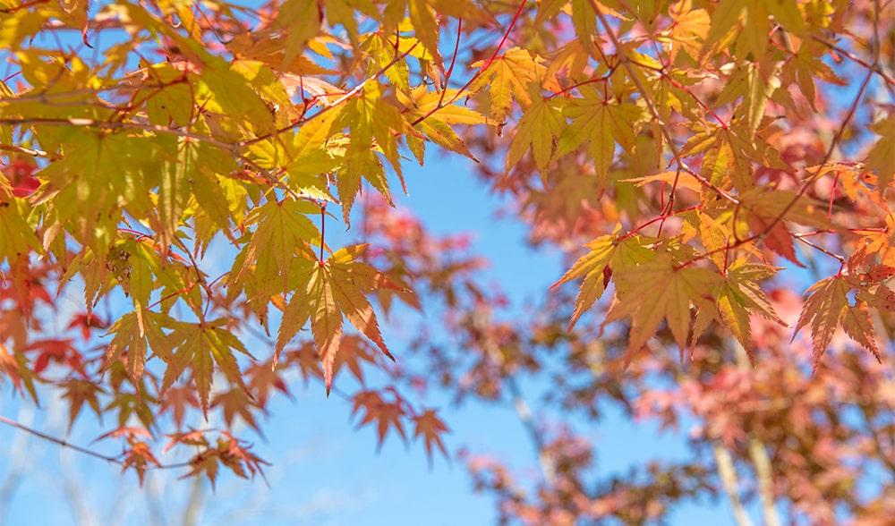 曽木の滝 紅葉2