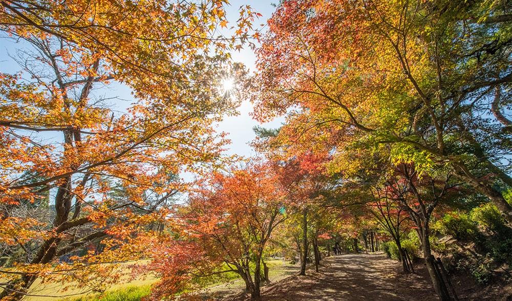 曽木の滝 紅葉1